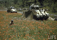 Color Photograph of American Tanks in Italy, WW2